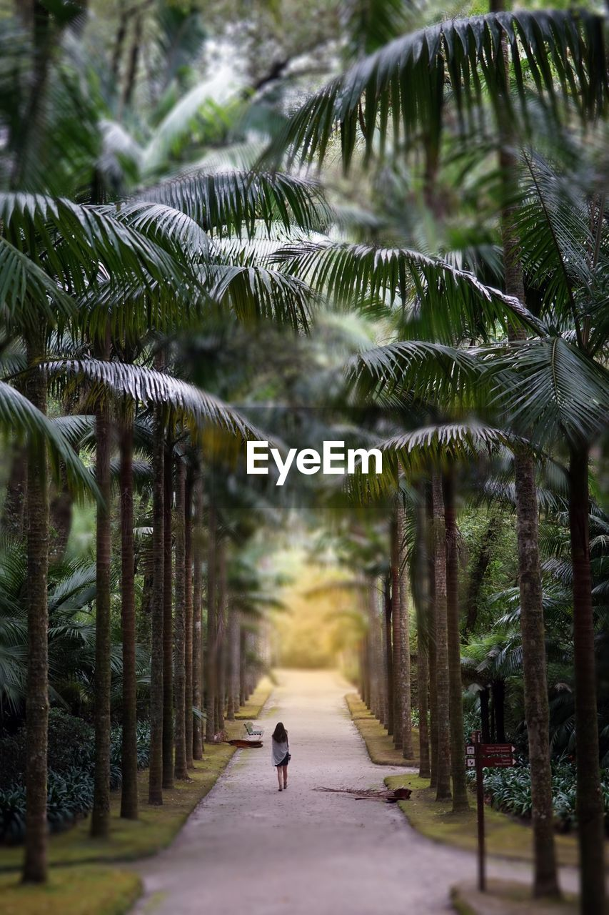 tree, plant, direction, growth, the way forward, nature, tropical climate, walking, one person, palm tree, real people, full length, beauty in nature, rear view, outdoors, day, land, footpath, lifestyles, treelined, palm leaf