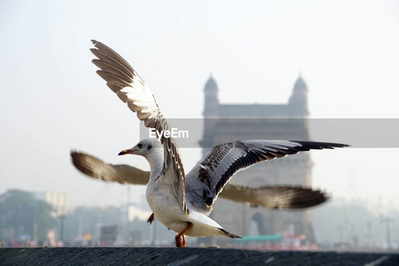 animal, vertebrate, bird, animals in the wild, flying, spread wings, animal themes, animal wildlife, architecture, focus on foreground, sky, built structure, one animal, building exterior, seagull, nature, mid-air, water, day, clear sky, no people, outdoors, animal wing, cityscape