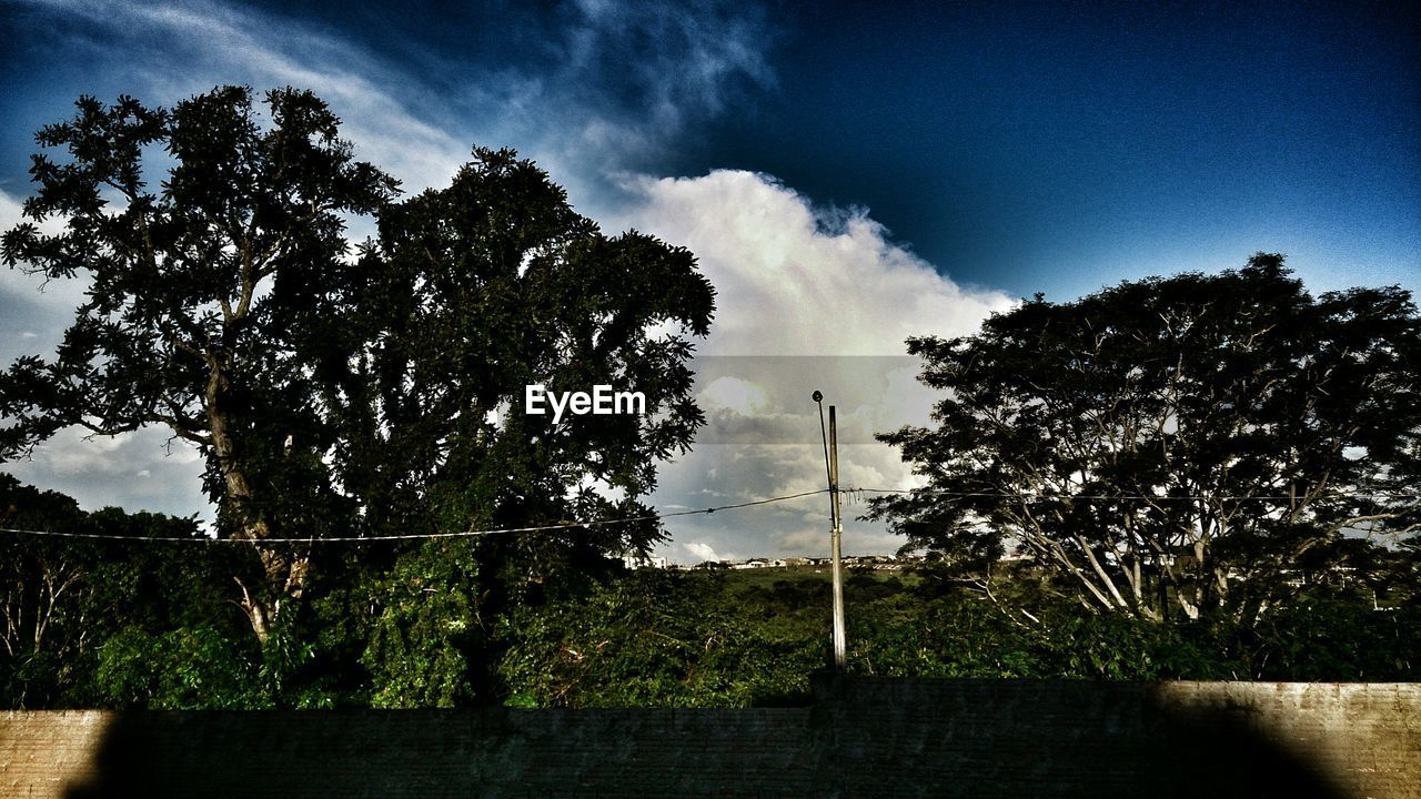 tree, sky, no people, nature, growth, beauty in nature, scenics, outdoors, day