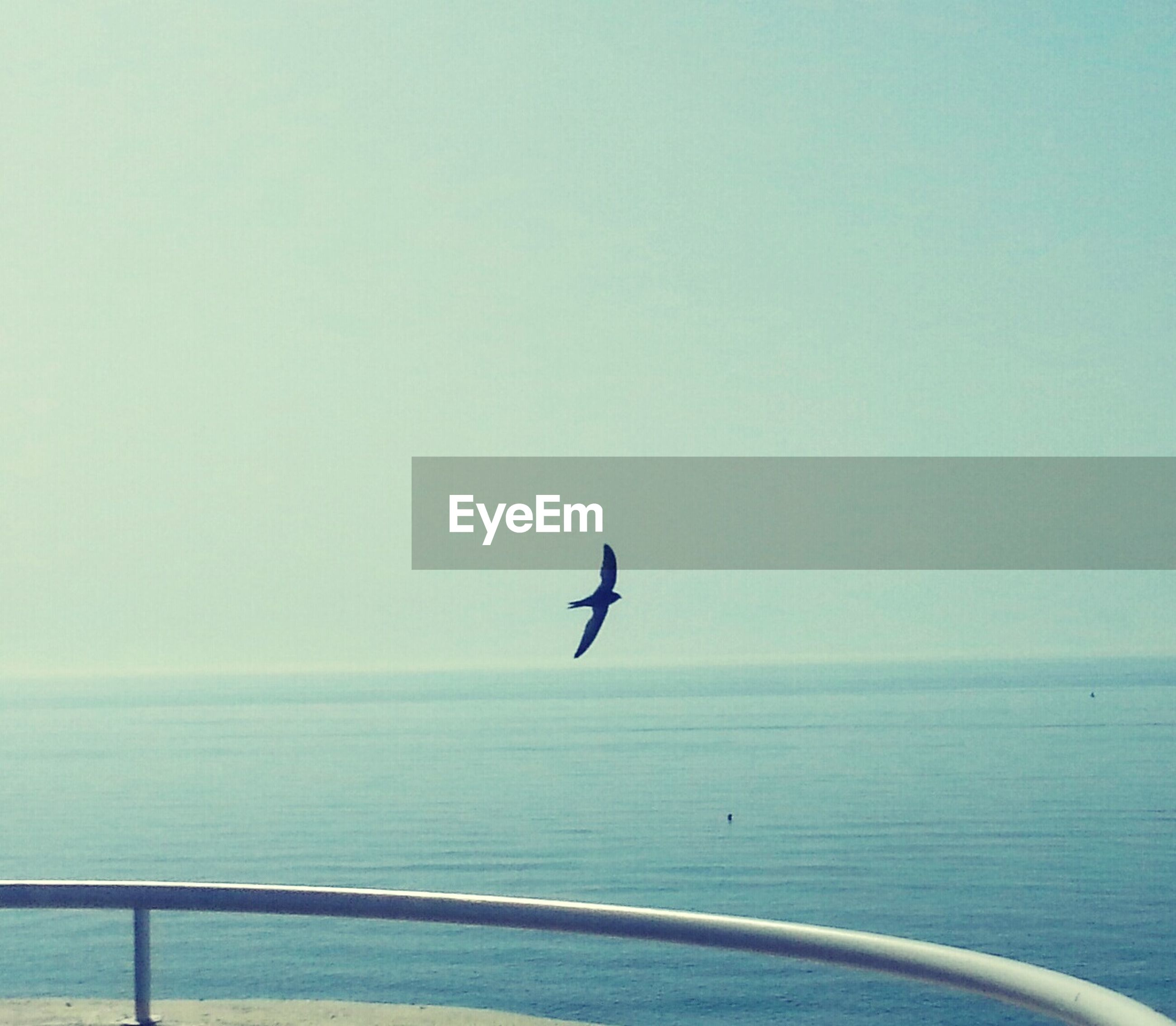 sea, horizon over water, water, bird, clear sky, flying, copy space, one animal, animal themes, wildlife, animals in the wild, tranquil scene, silhouette, tranquility, scenics, nature, beauty in nature, mid-air, sky, outdoors