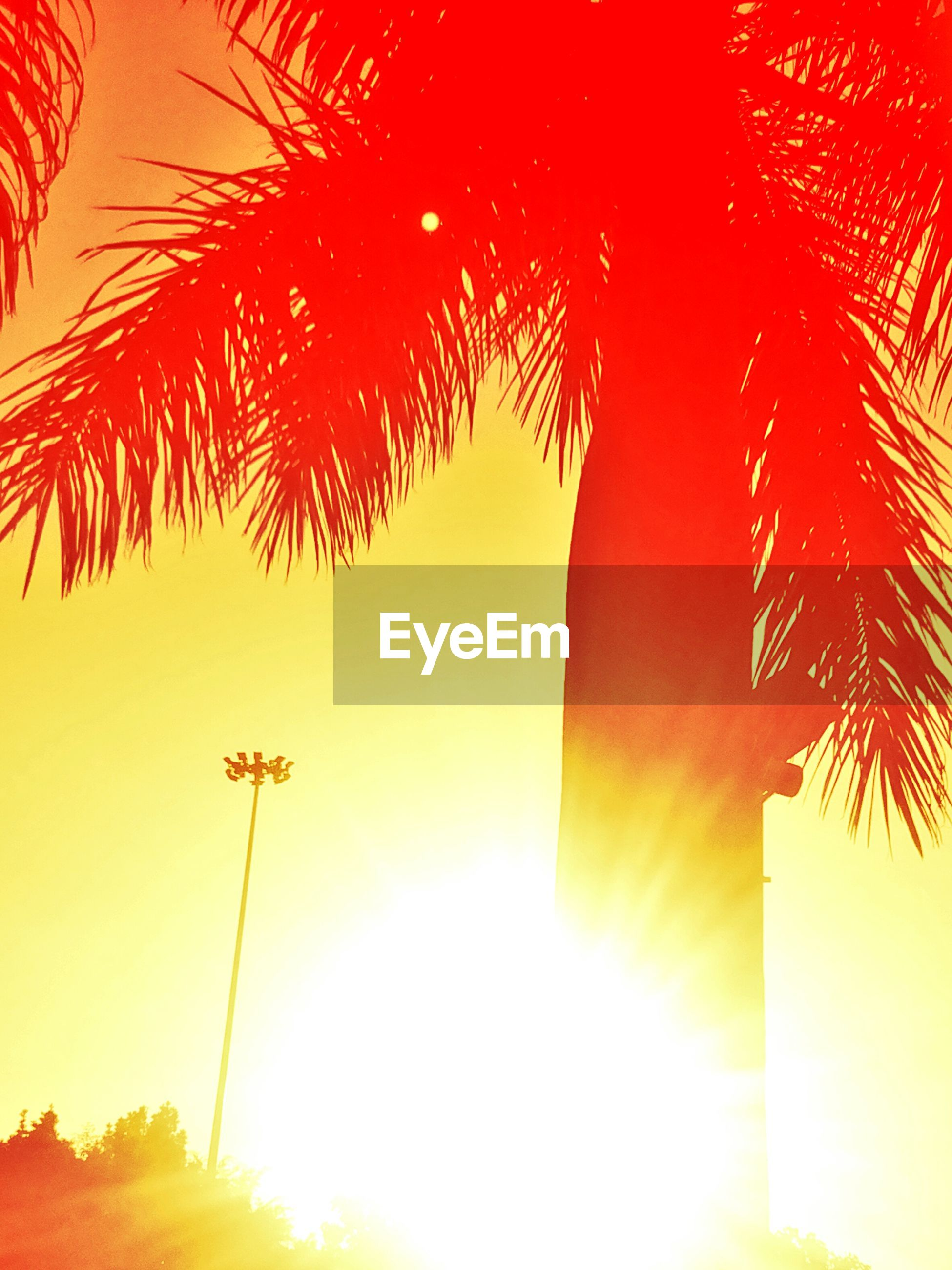 Low angle view of palm tree against yellow sky