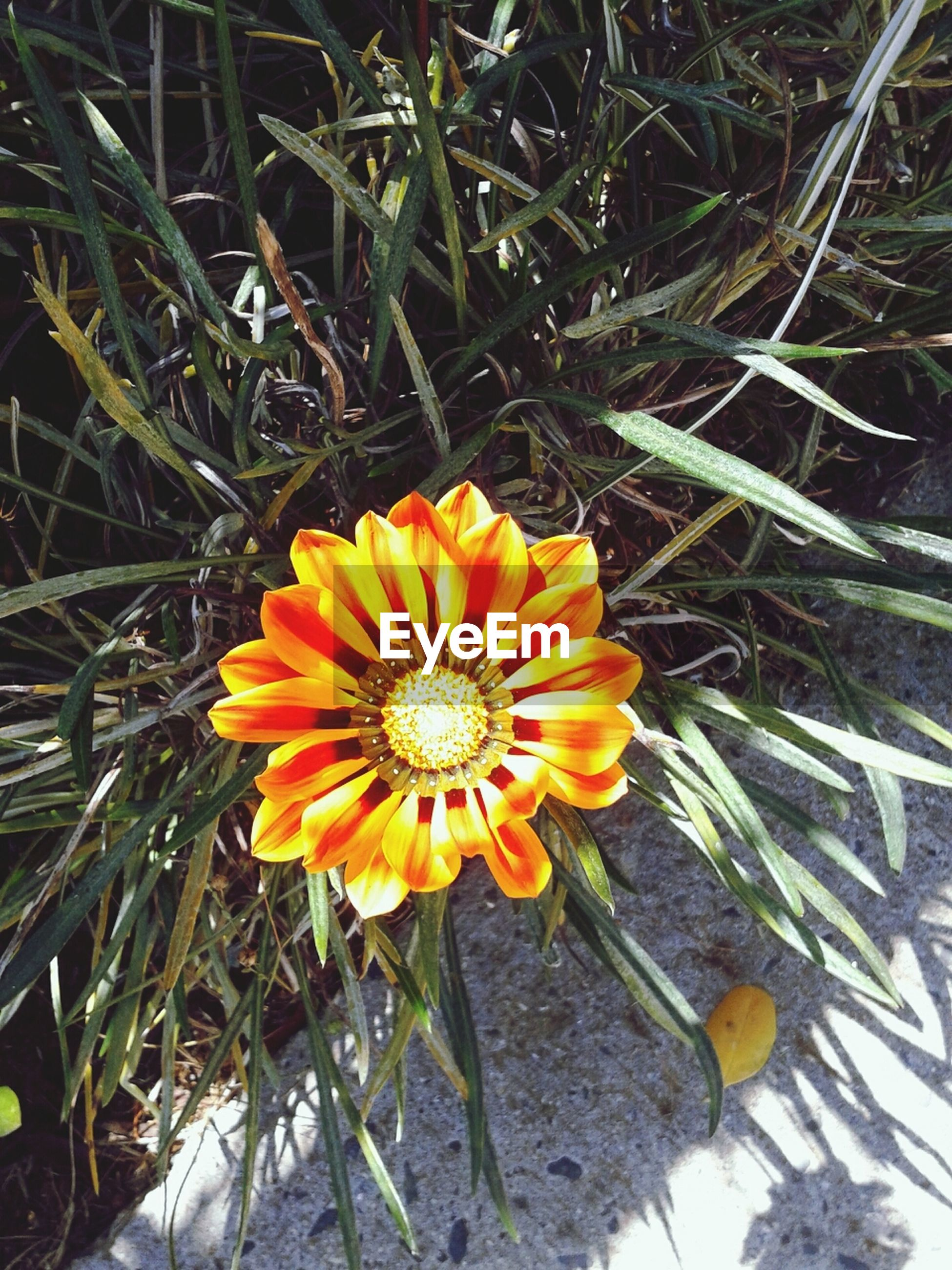 flower, fragility, petal, freshness, flower head, yellow, growth, high angle view, single flower, beauty in nature, plant, nature, blooming, pollen, close-up, field, in bloom, orange color, directly above, no people