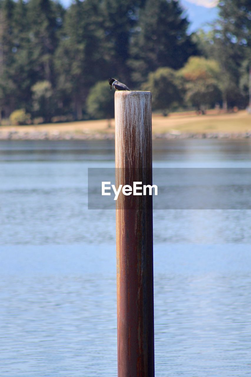 VIEW OF BIRD ON WOODEN POST