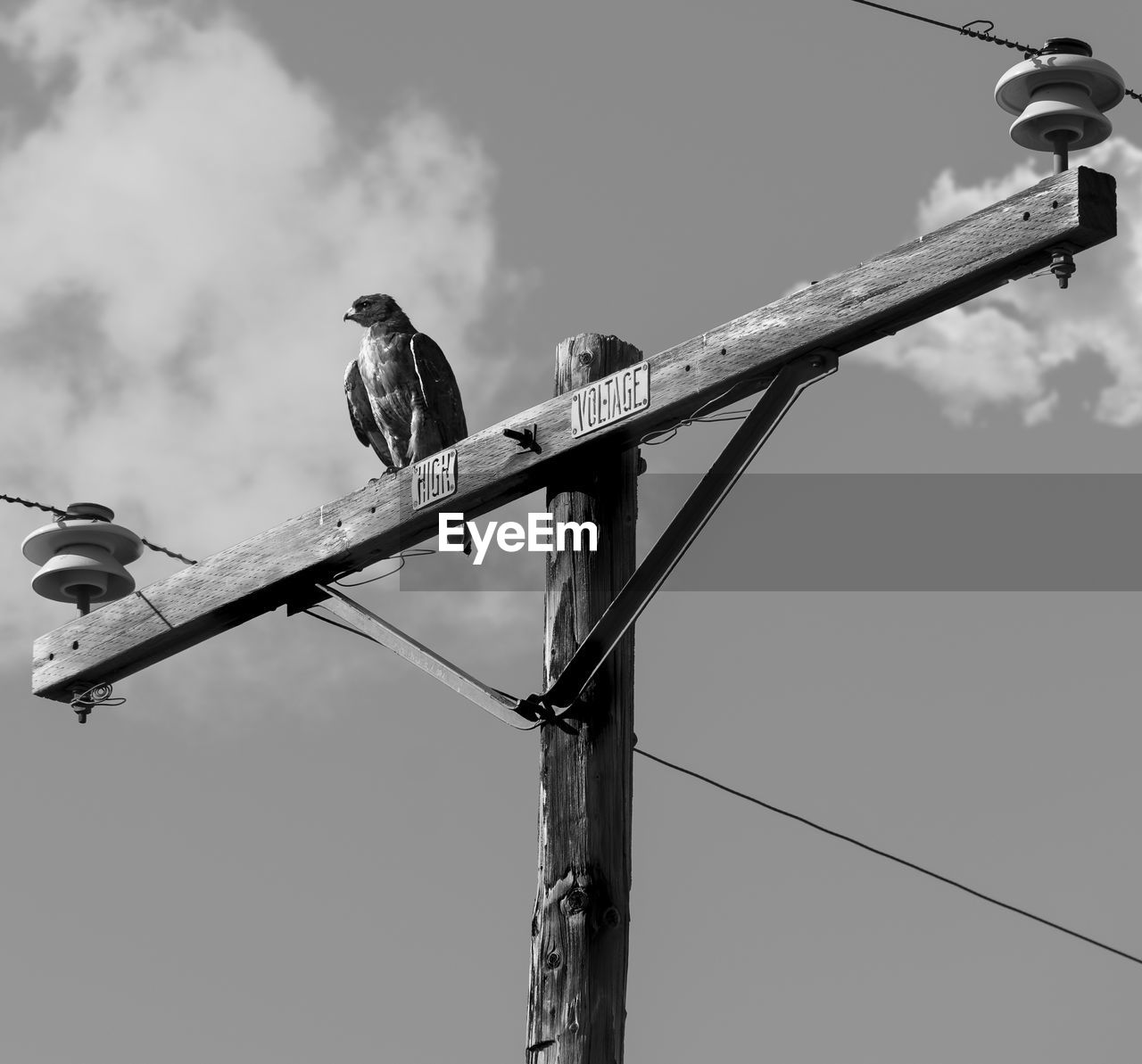 bird, vertebrate, animal themes, animal, animals in the wild, animal wildlife, low angle view, perching, sky, no people, one animal, nature, day, cable, electricity, power line, outdoors, technology, metal, power supply
