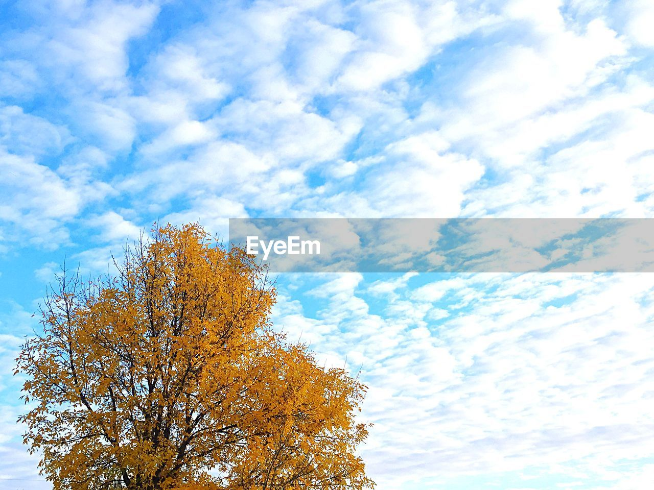 sky, cloud - sky, tree, nature, beauty in nature, low angle view, autumn, day, change, tranquility, leaf, growth, no people, outdoors, scenics, branch, blue, close-up