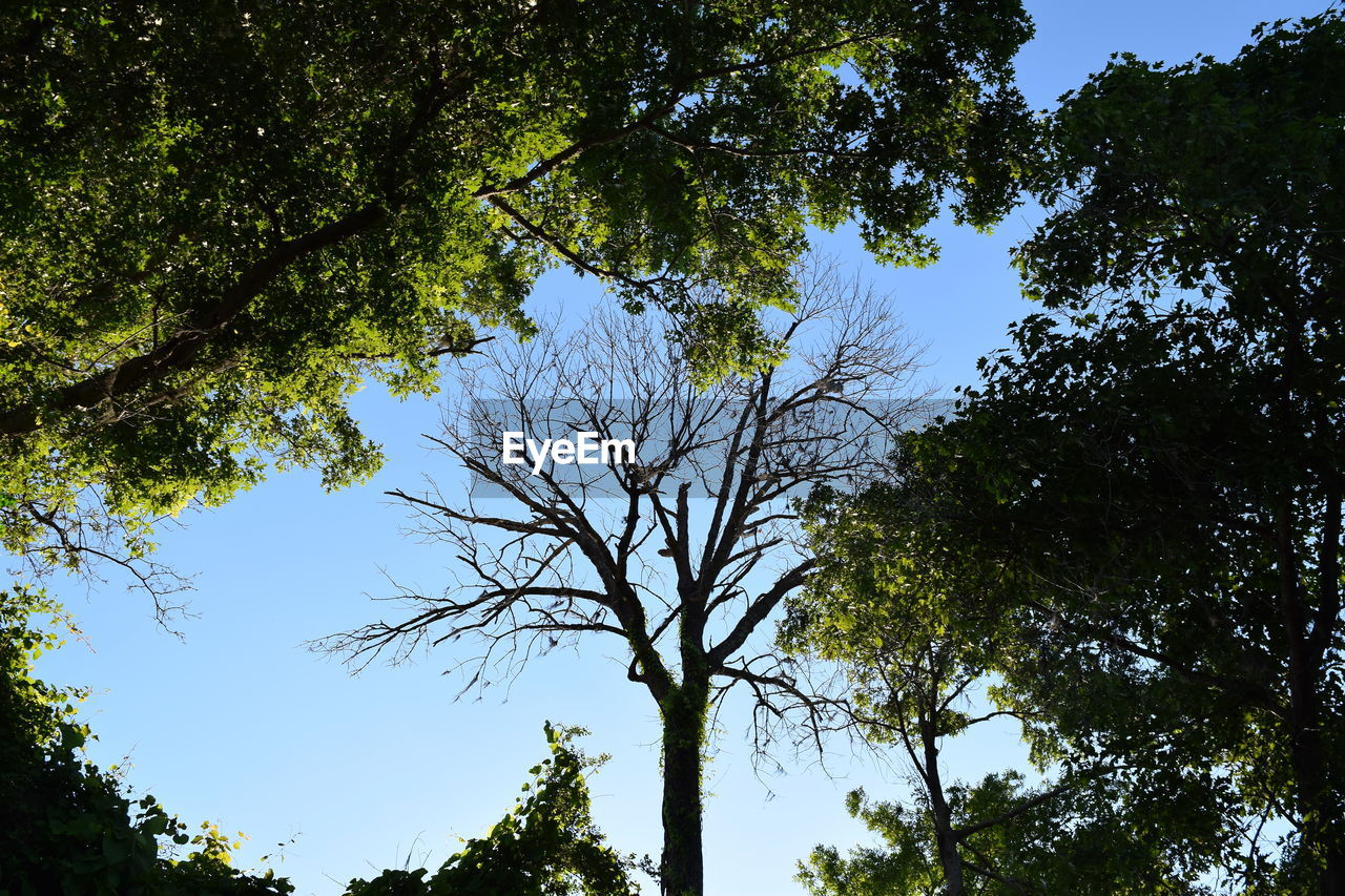 tree, growth, branch, low angle view, nature, outdoors, day, forest, sky, no people, clear sky, beauty in nature, hope