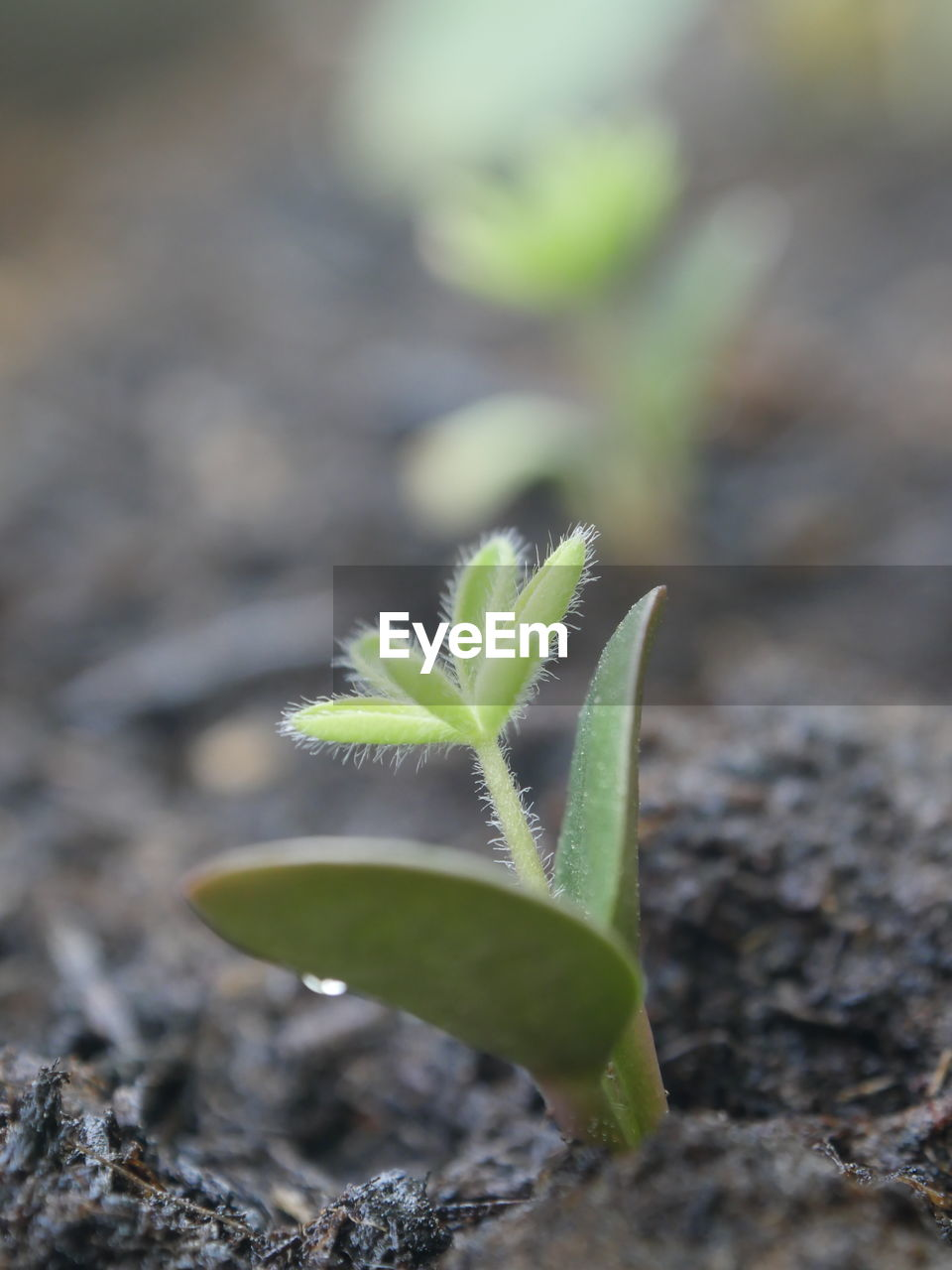 beginnings, growth, new life, green color, young plant, nature, fragility, plant, leaf, selective focus, day, beauty in nature, sapling, outdoors, no people, close-up, freshness