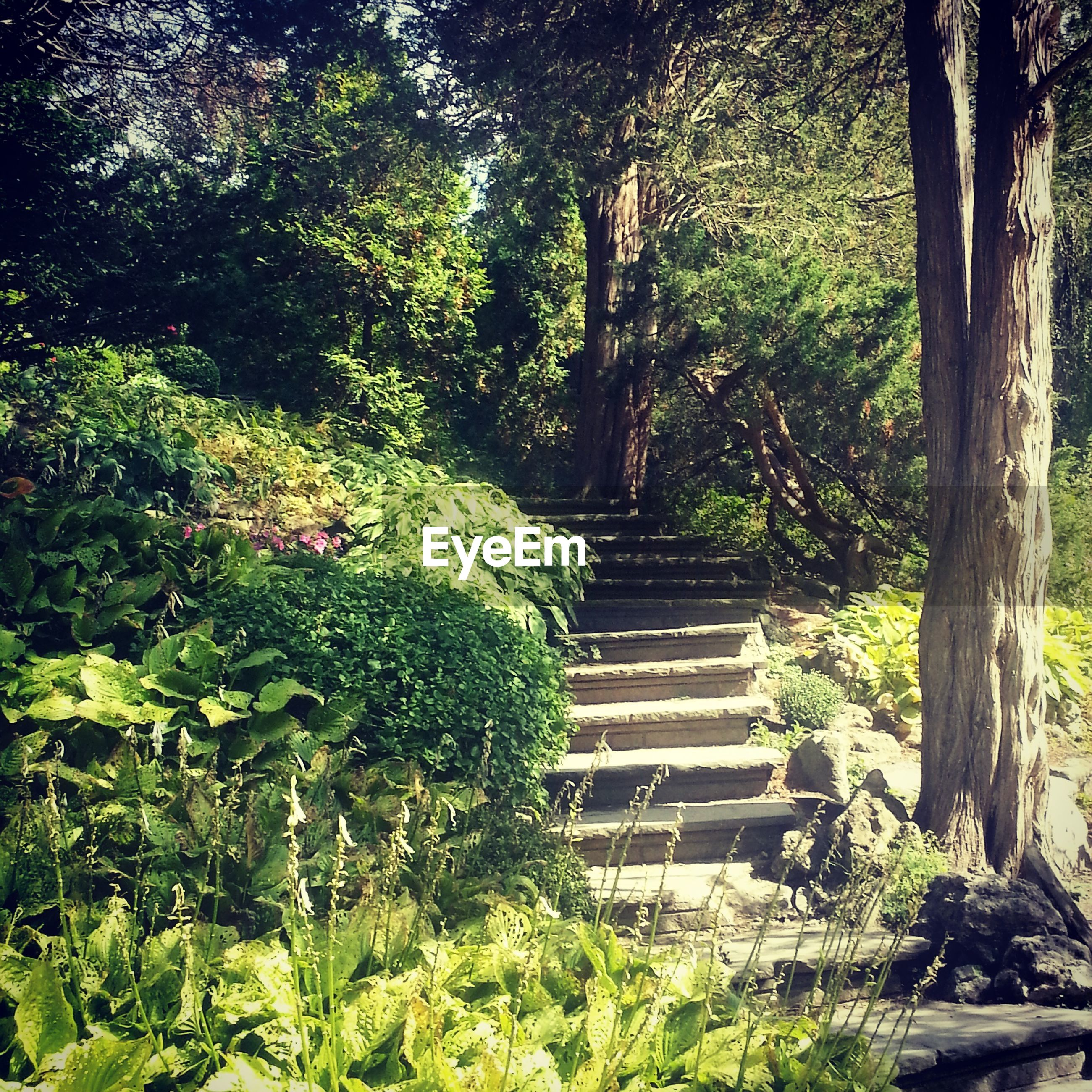 tree, growth, forest, tranquility, steps, the way forward, nature, plant, green color, beauty in nature, tranquil scene, tree trunk, park - man made space, footpath, branch, day, outdoors, lush foliage, no people, scenics