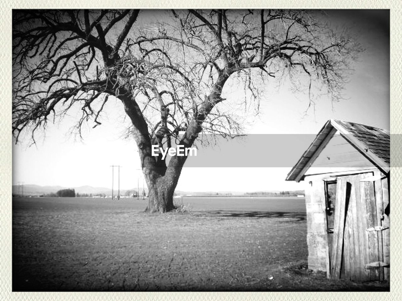 bare tree, tree, house, day, tranquility, abandoned, outdoors, no people, branch, field, built structure, tree trunk, landscape, grass, architecture, building exterior, scenics, sky, nature