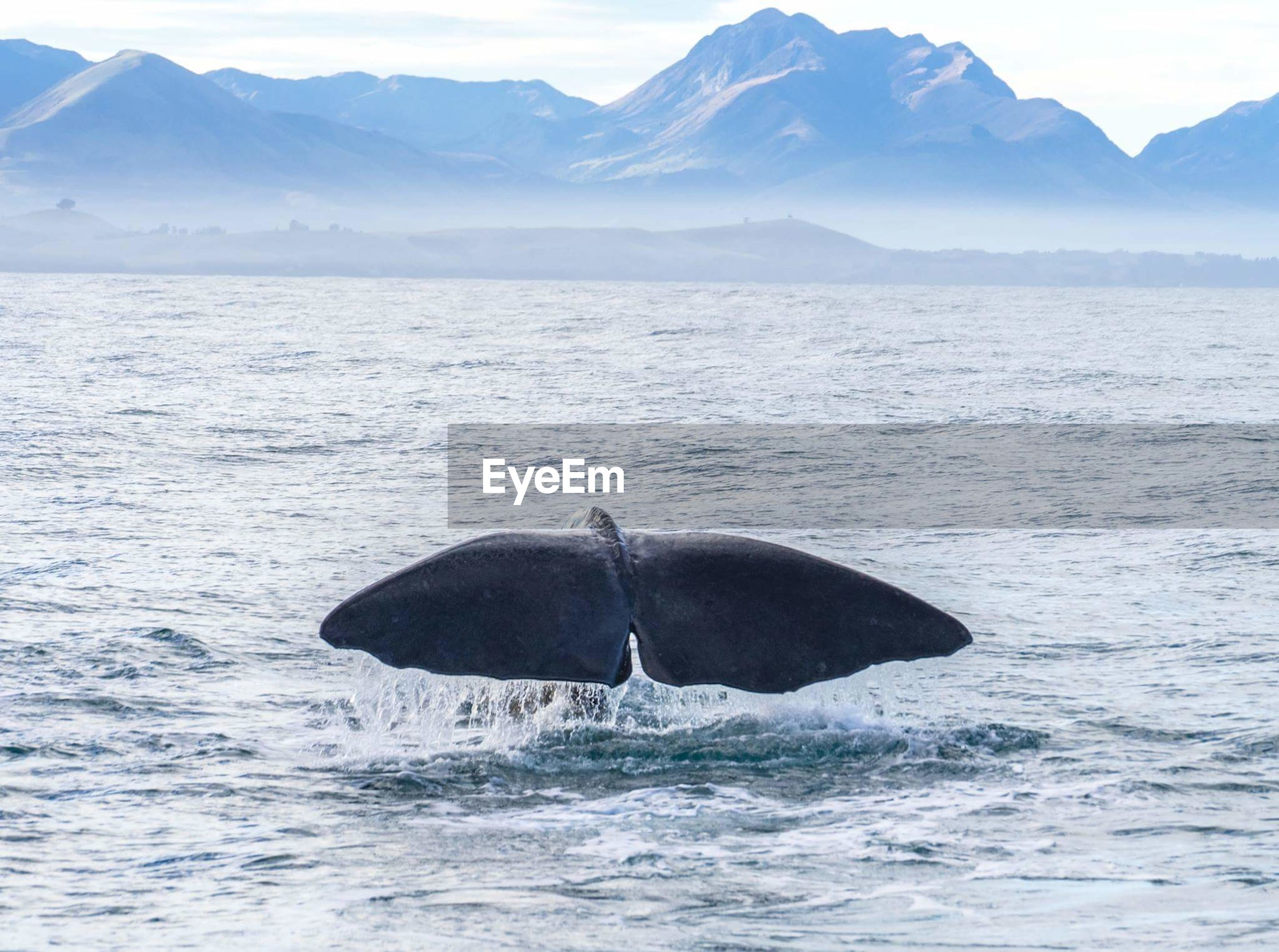 Scenic view of whale tail against sea