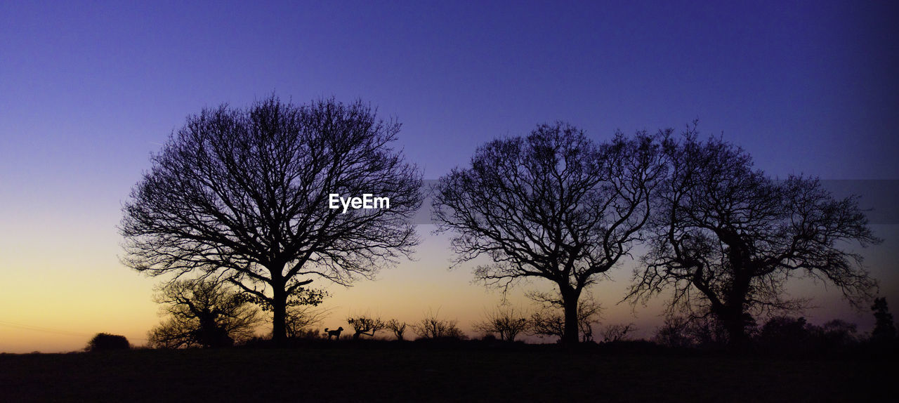tree, sky, plant, tranquil scene, beauty in nature, silhouette, scenics - nature, tranquility, sunset, landscape, environment, field, land, nature, bare tree, no people, non-urban scene, clear sky, blue, idyllic, outdoors, purple