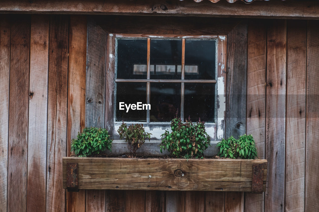 Plants on window box