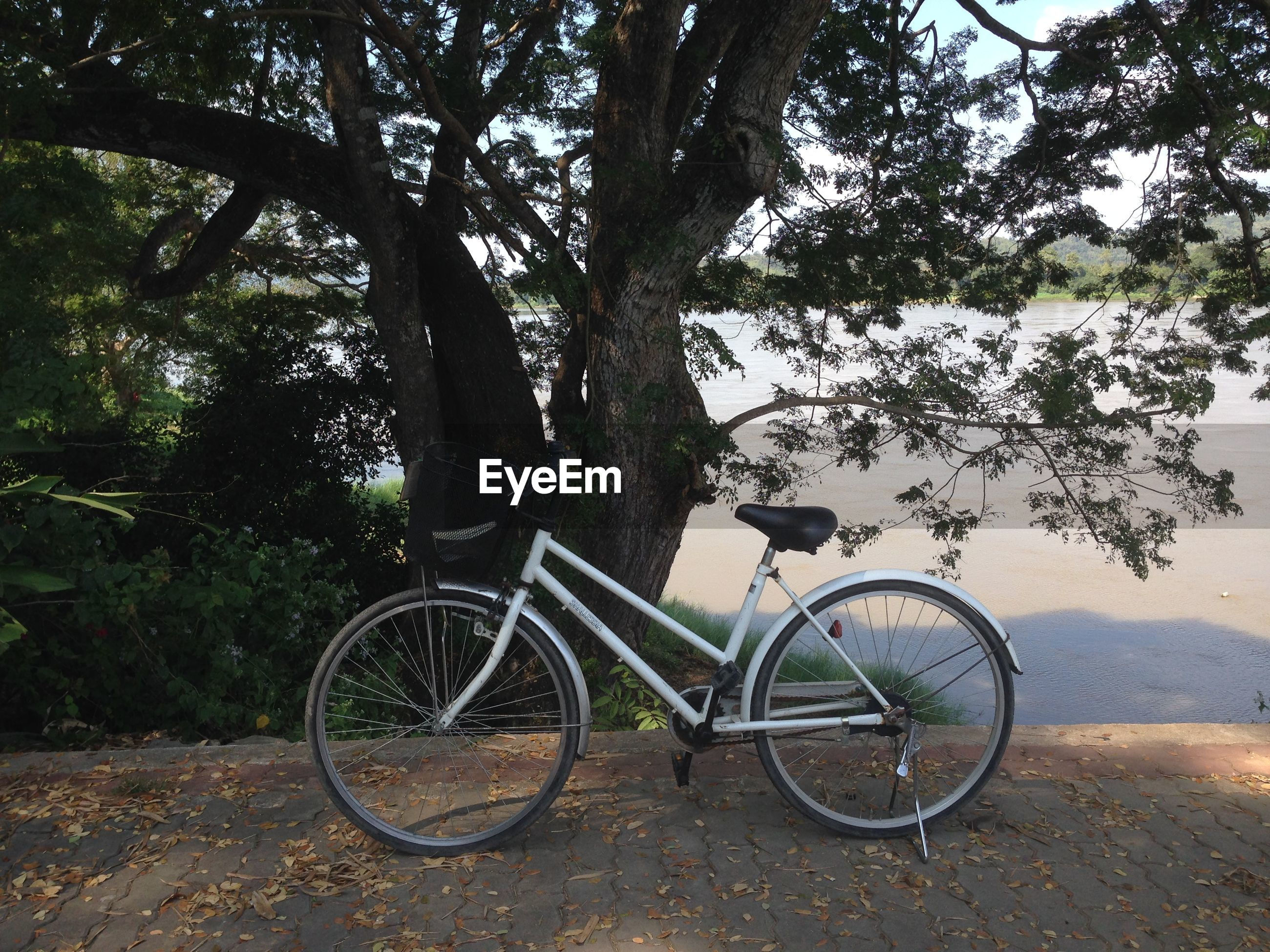 Bicycle parked against tree