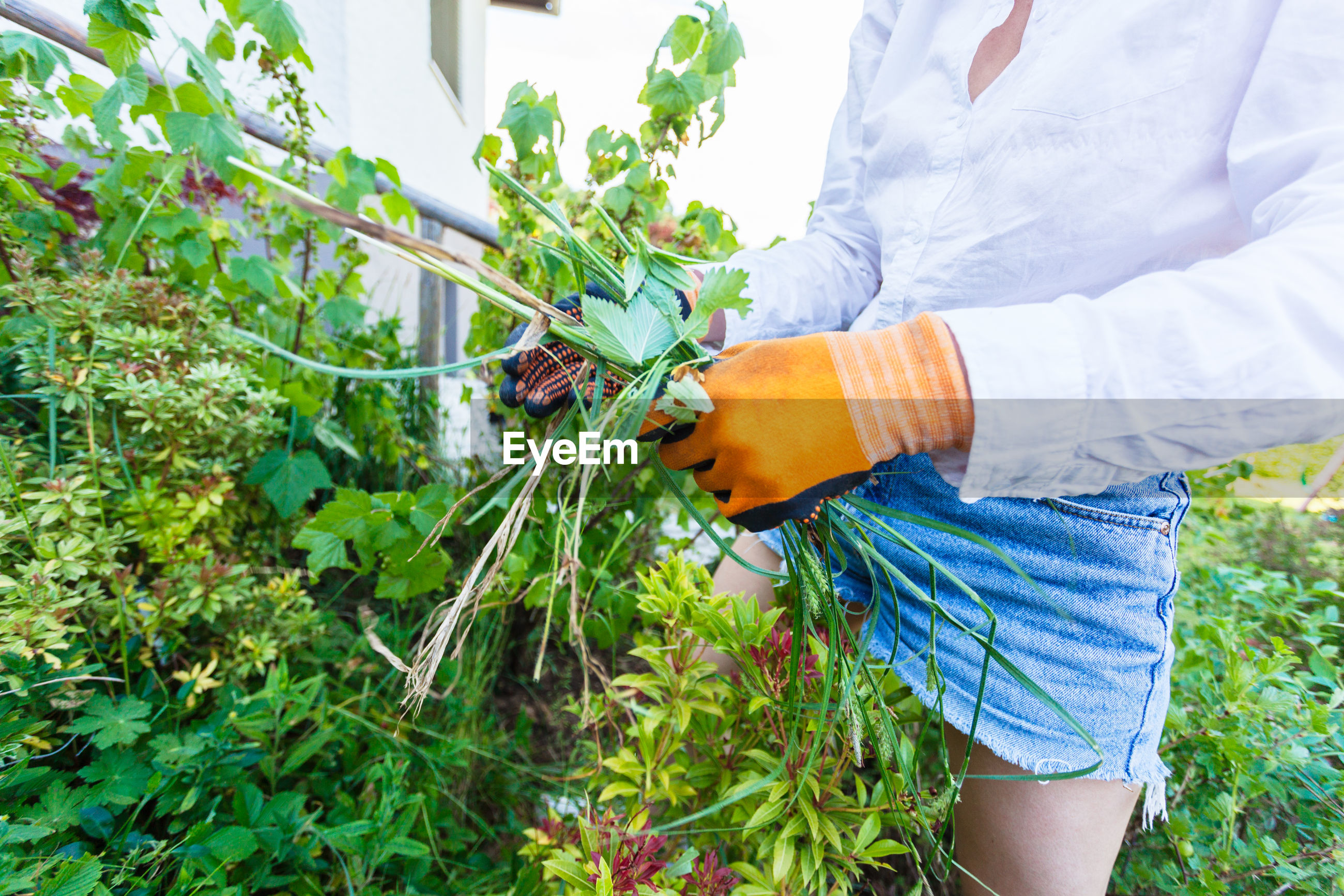 Midsection of woman gardening at backyard