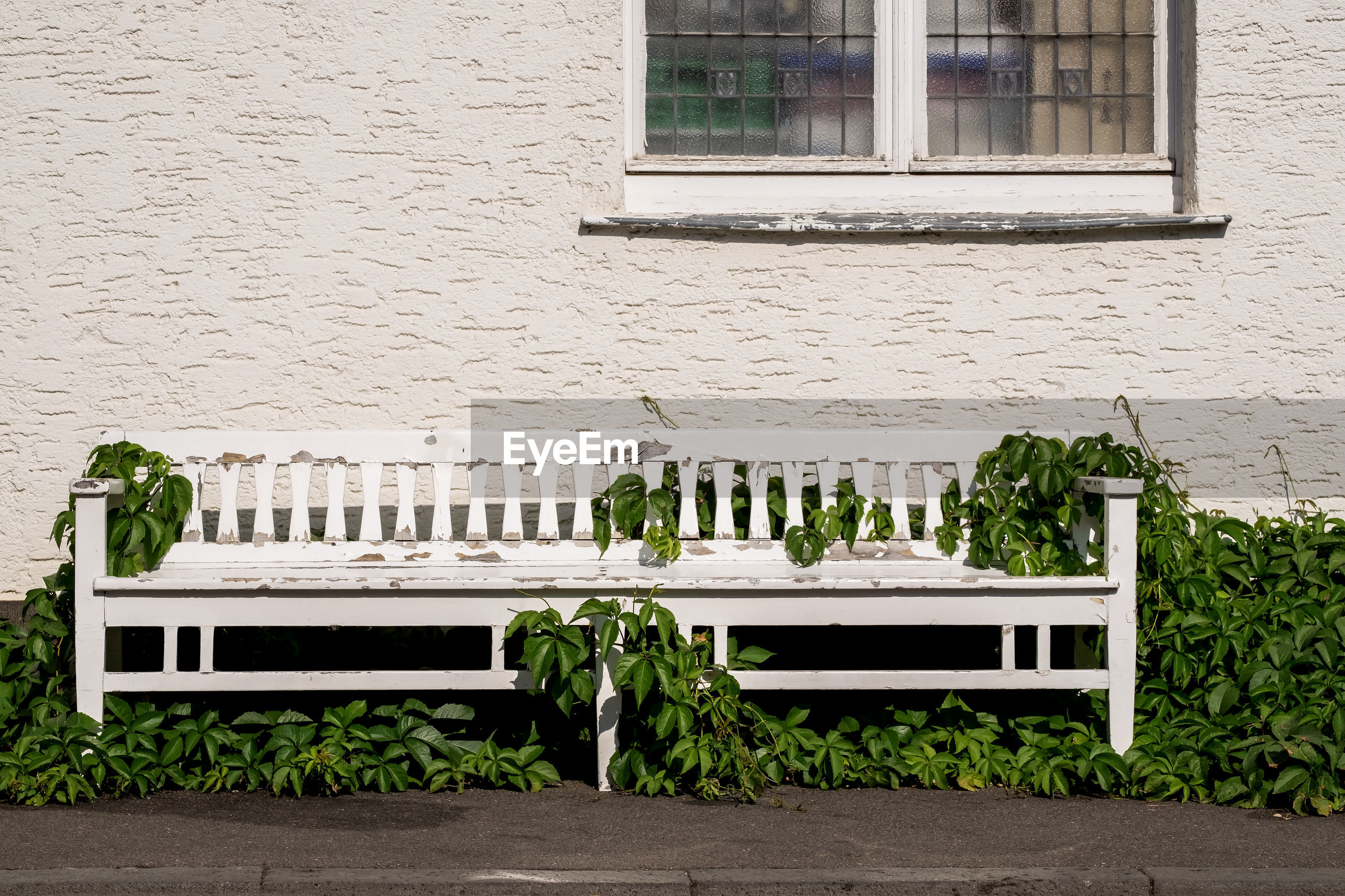 Old bench covered by ivy against building