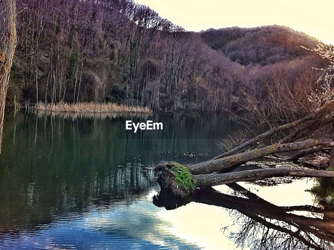 tree, nature, lake, water, tranquility, tranquil scene, reflection, beauty in nature, outdoors, scenics, no people, landscape, forest, sky, growth, plant, tree trunk, day, grass, mountain, sunset, animal themes