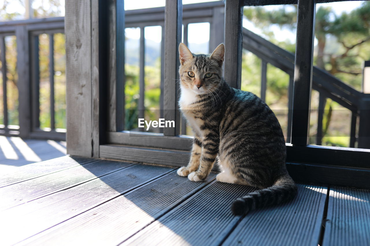 domestic animals, domestic, pets, feline, cat, mammal, animal themes, one animal, animal, vertebrate, domestic cat, no people, day, sitting, table, wood - material, relaxation, window, looking, focus on foreground, whisker, mouth open