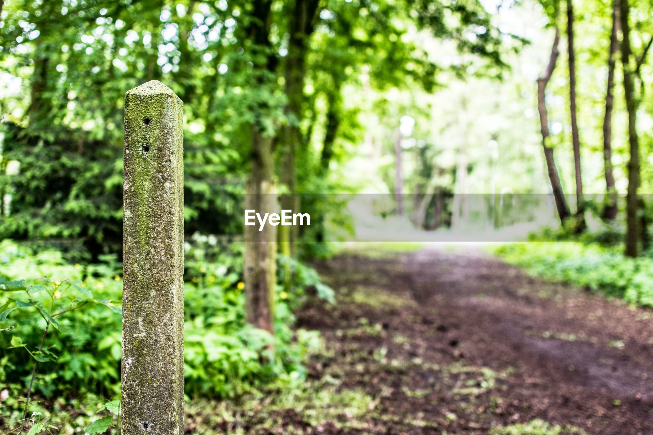 tree, forest, the way forward, growth, nature, tranquility, tree trunk, selective focus, focus on foreground, green color, diminishing perspective, day, tranquil scene, footpath, outdoors, no people, plant, beauty in nature, wood - material, surface level