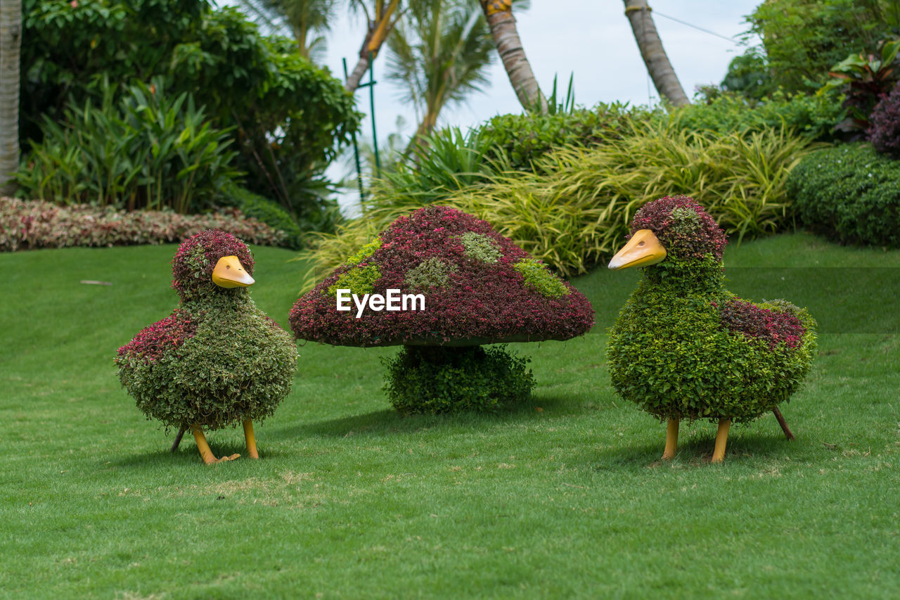 green color, growth, bird, animal themes, tree, day, nature, grass, plant, outdoors, field, animals in the wild, no people, beauty in nature, peacock