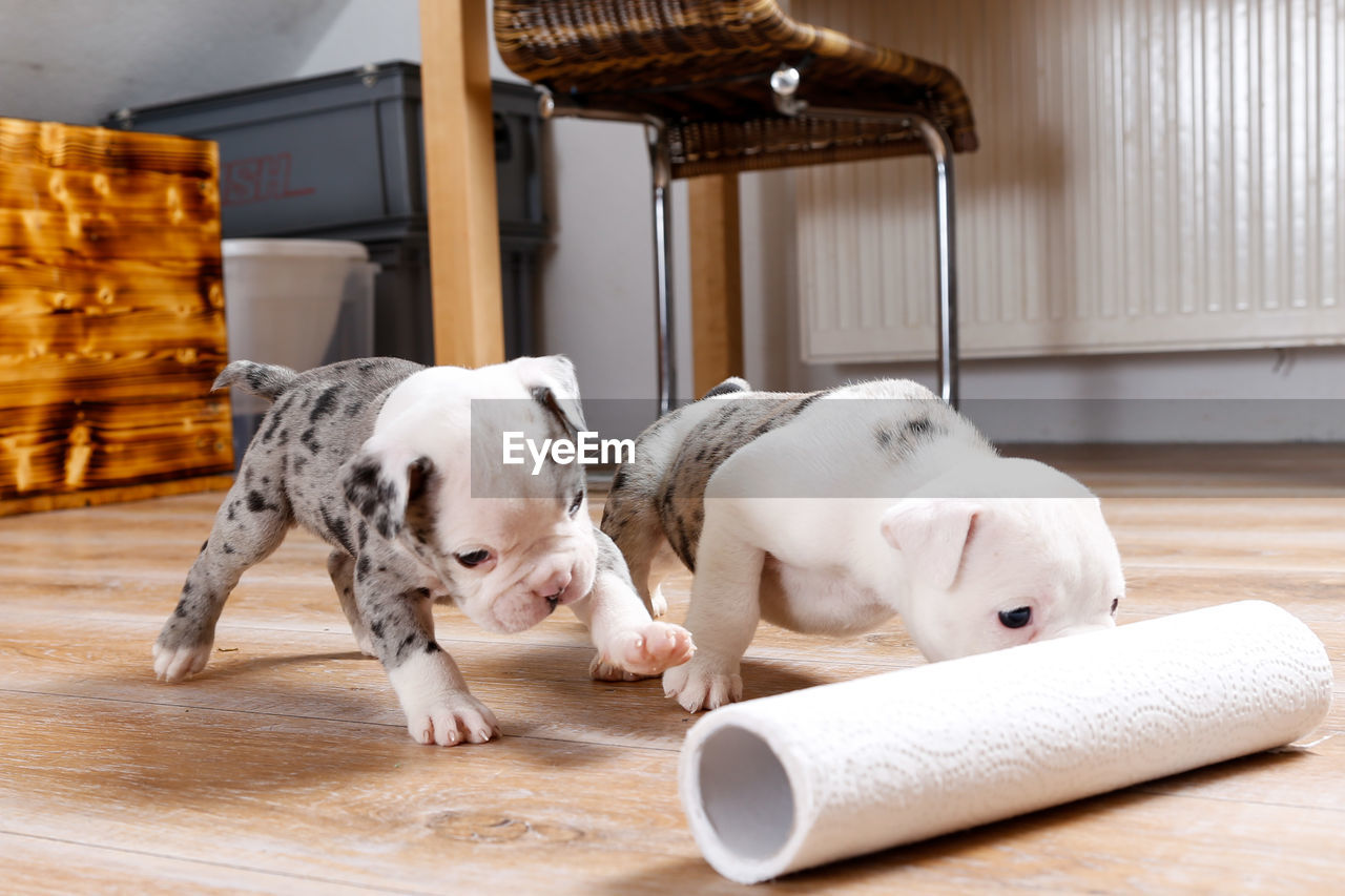 View Of Dogs Playing