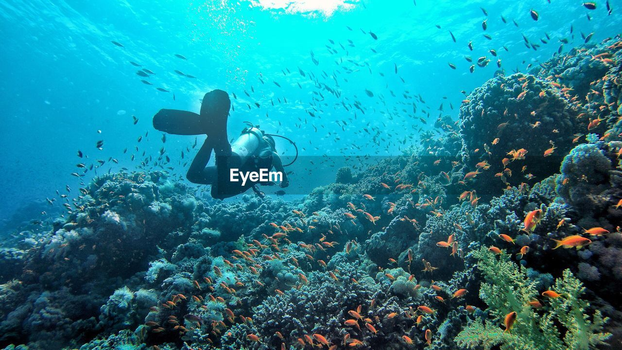 Person scuba diving by coral amidst fish swimming in sea