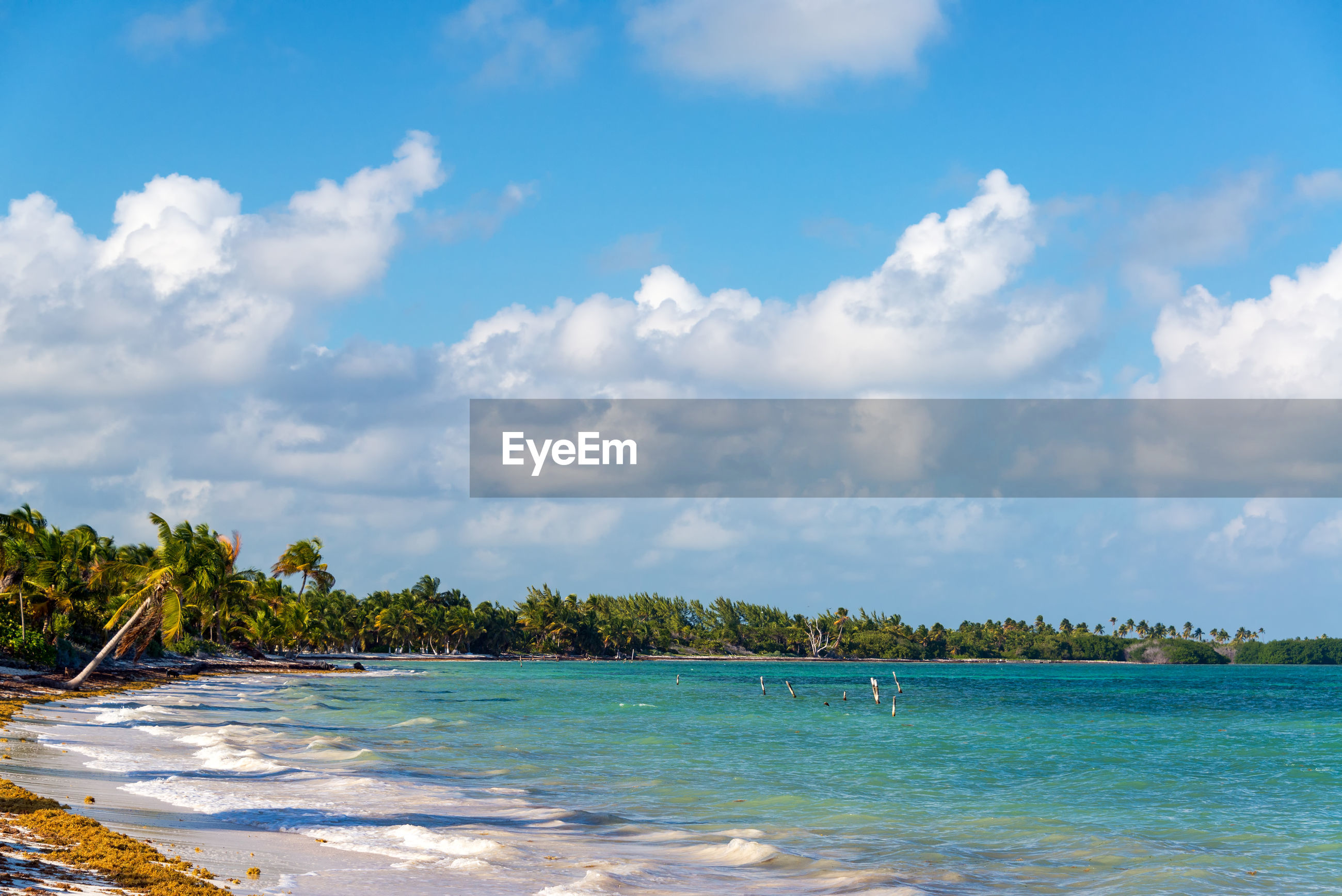Scenic view of palm trees at beach against sky during sunny day