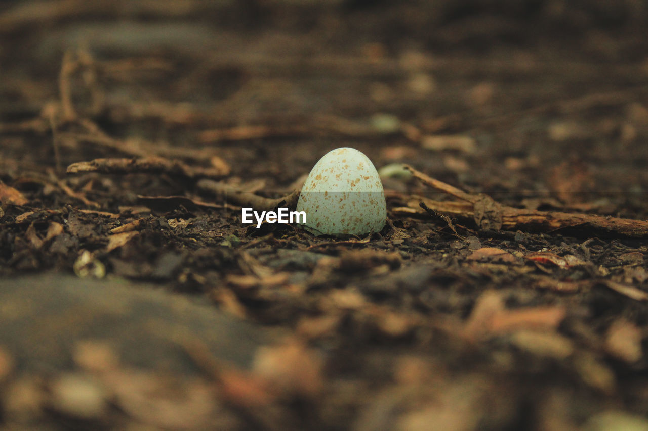 selective focus, close-up, food, nature, day, leaf, land, no people, plant part, food and drink, field, growth, fungus, outdoors, vegetable, mushroom, plant, surface level, freshness, ground