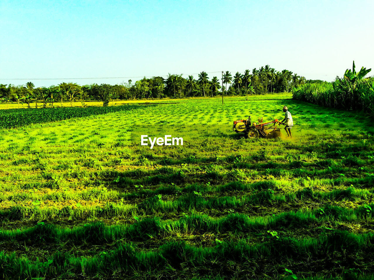 plant, sky, grass, field, green color, landscape, land, environment, animal, tree, animal themes, nature, mammal, domestic, domestic animals, beauty in nature, clear sky, tranquil scene, pets, tranquility, no people, outdoors