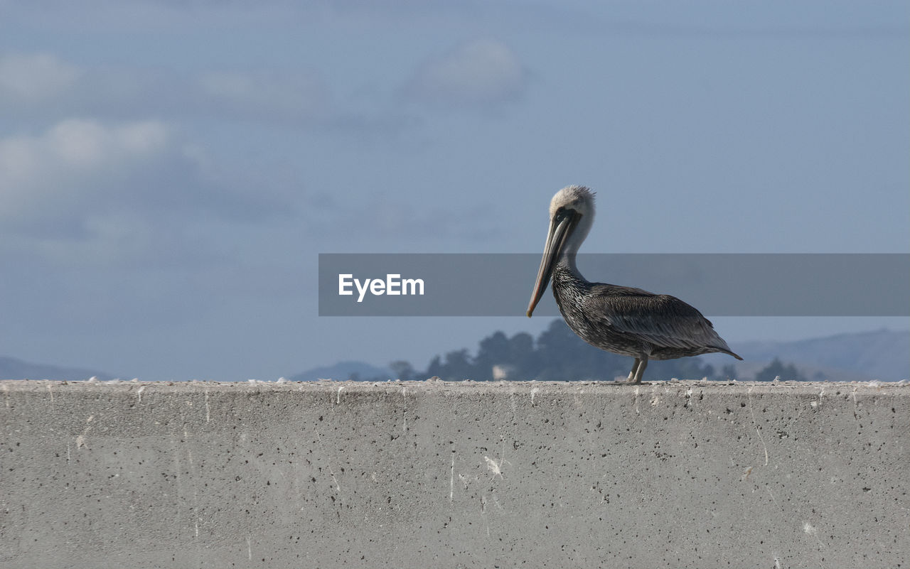 animals in the wild, animal wildlife, bird, animal themes, animal, vertebrate, one animal, perching, day, wall, nature, retaining wall, no people, focus on foreground, sky, outdoors, water, beak, side view, water bird, seagull