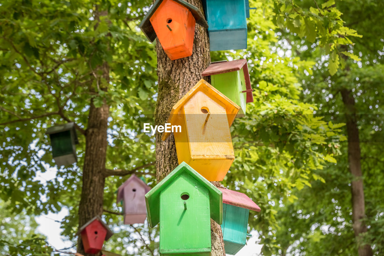tree, representation, birdhouse, human representation, plant, no people, nature, day, green color, focus on foreground, creativity, low angle view, art and craft, outdoors, wood - material, hanging, built structure, male likeness, close-up, sunlight