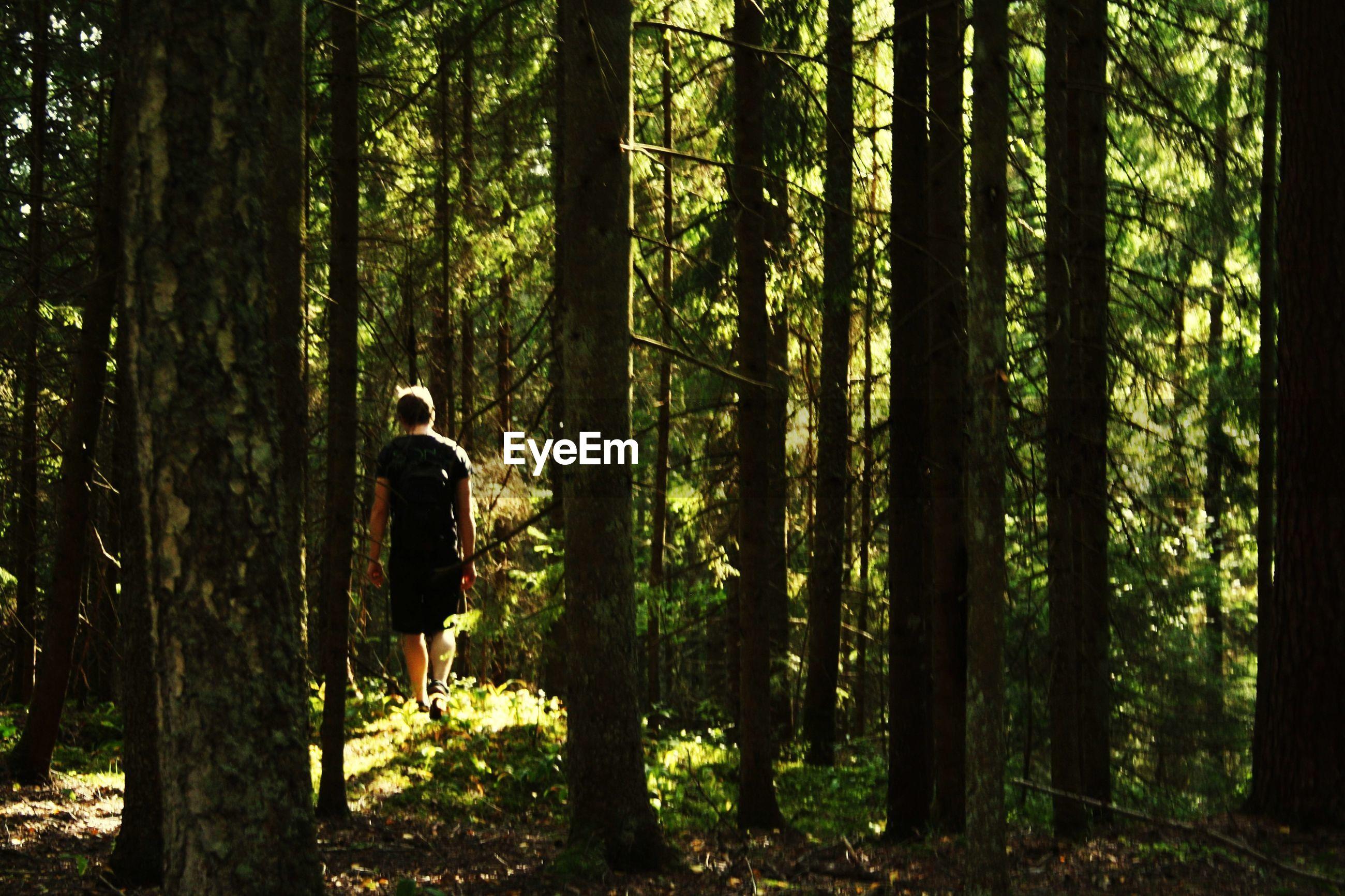 MAN WALKING BY TREE TRUNKS IN FOREST