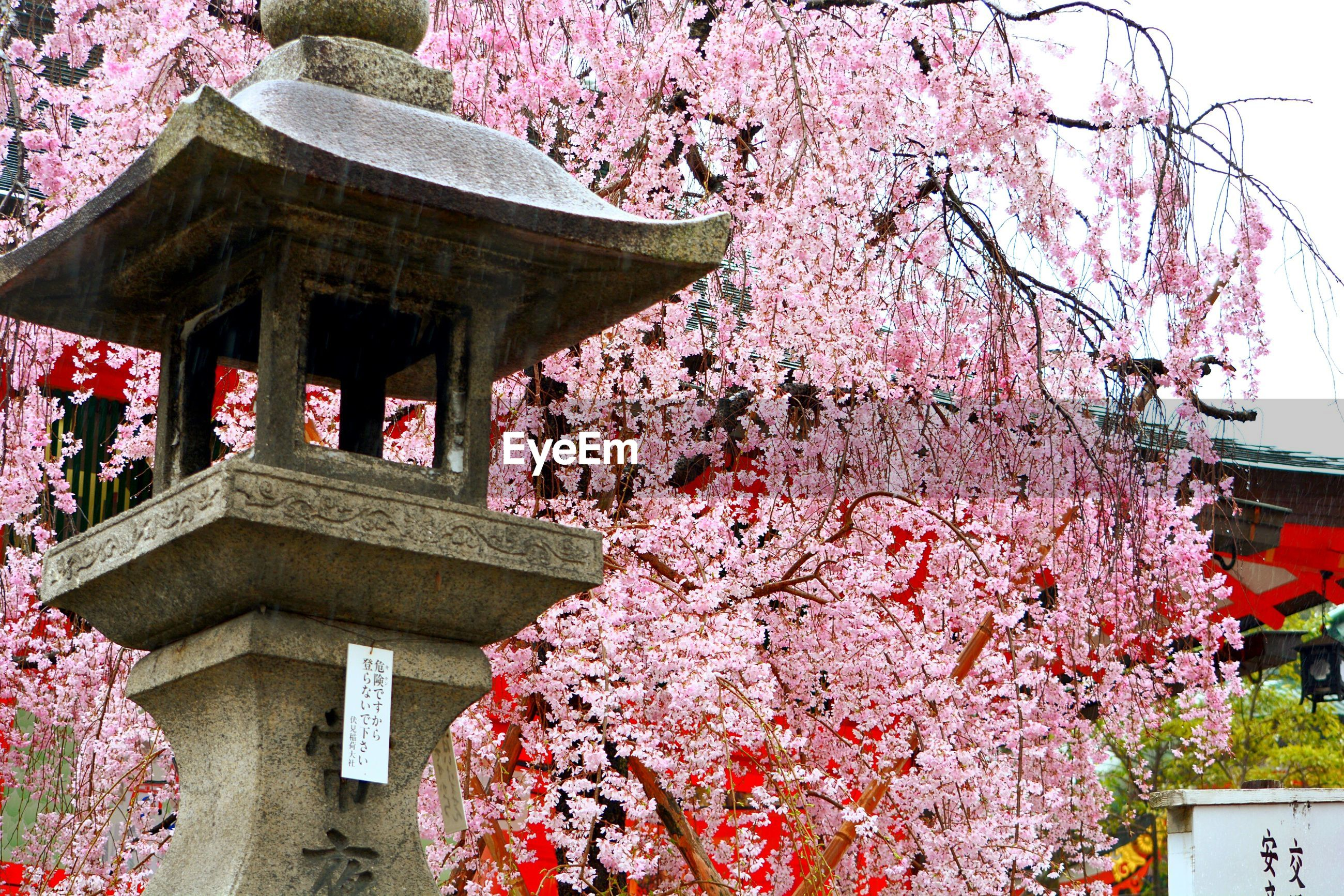 flower, pink color, built structure, architecture, freshness, tree, building exterior, growth, place of worship, religion, fragility, plant, temple - building, spirituality, petal, blooming, blossom, nature, beauty in nature, low angle view