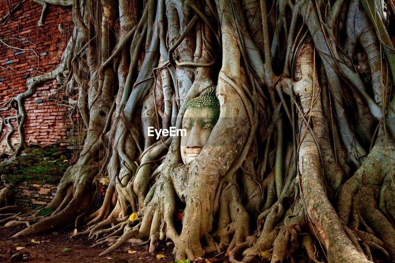 Buddha Statue Amidst Tree Trunk
