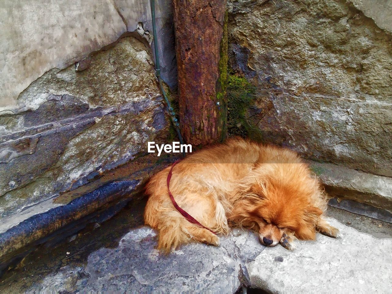 High angle view of dog sleeping outdoors