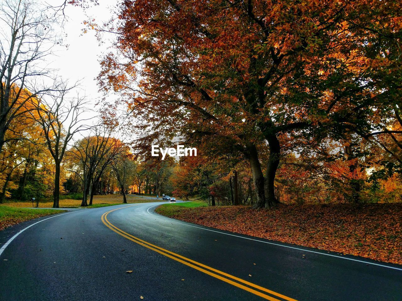 tree, autumn, plant, change, road, direction, transportation, the way forward, nature, beauty in nature, no people, road marking, marking, tranquility, day, sign, growth, symbol, orange color, outdoors, diminishing perspective, dividing line