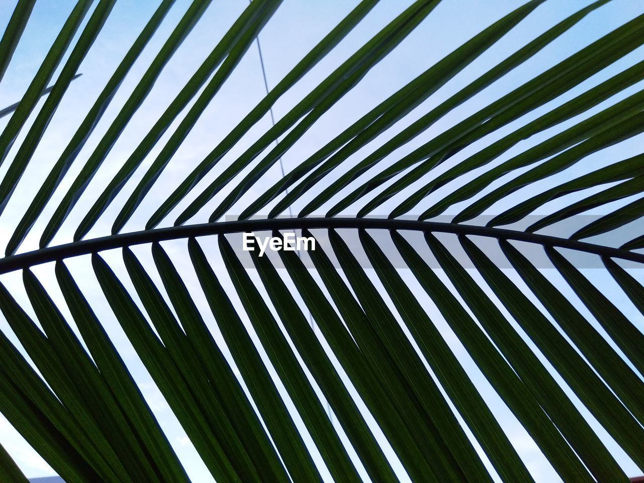 LOW ANGLE VIEW OF PALM LEAF