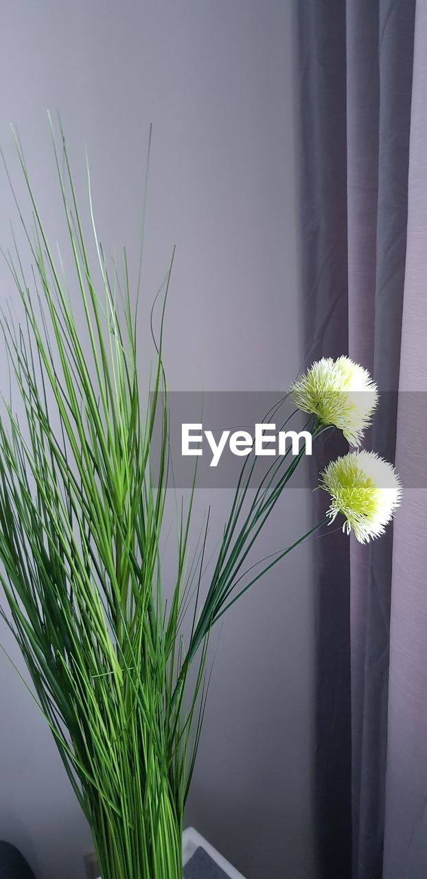 plant, flower, flowering plant, growth, nature, fragility, vulnerability, beauty in nature, close-up, freshness, green color, no people, flower head, indoors, inflorescence, vase, plant stem, day, potted plant, flower arrangement, flower pot