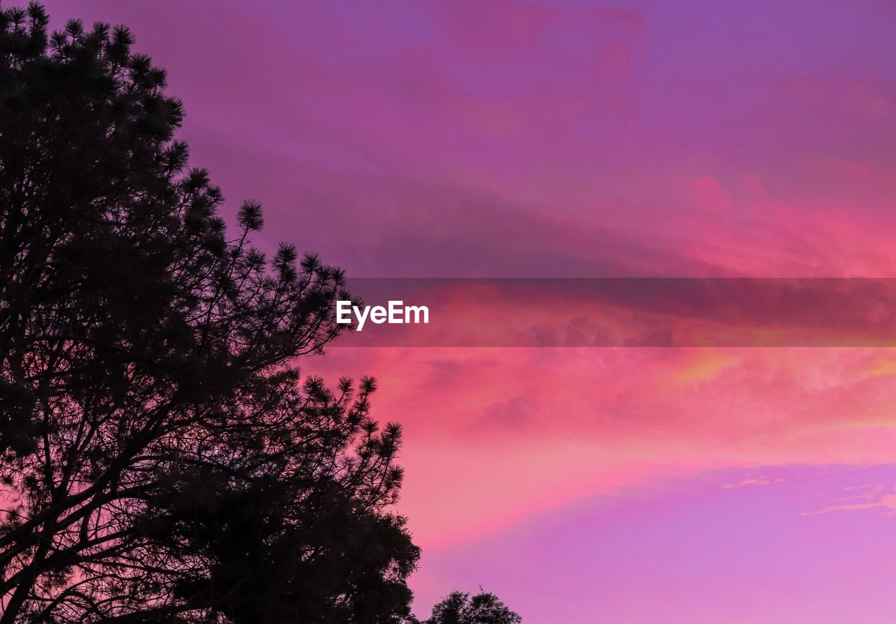 sky, tree, plant, beauty in nature, cloud - sky, pink color, sunset, tranquility, scenics - nature, silhouette, no people, nature, growth, low angle view, tranquil scene, outdoors, idyllic, purple, dusk, branch, romantic sky