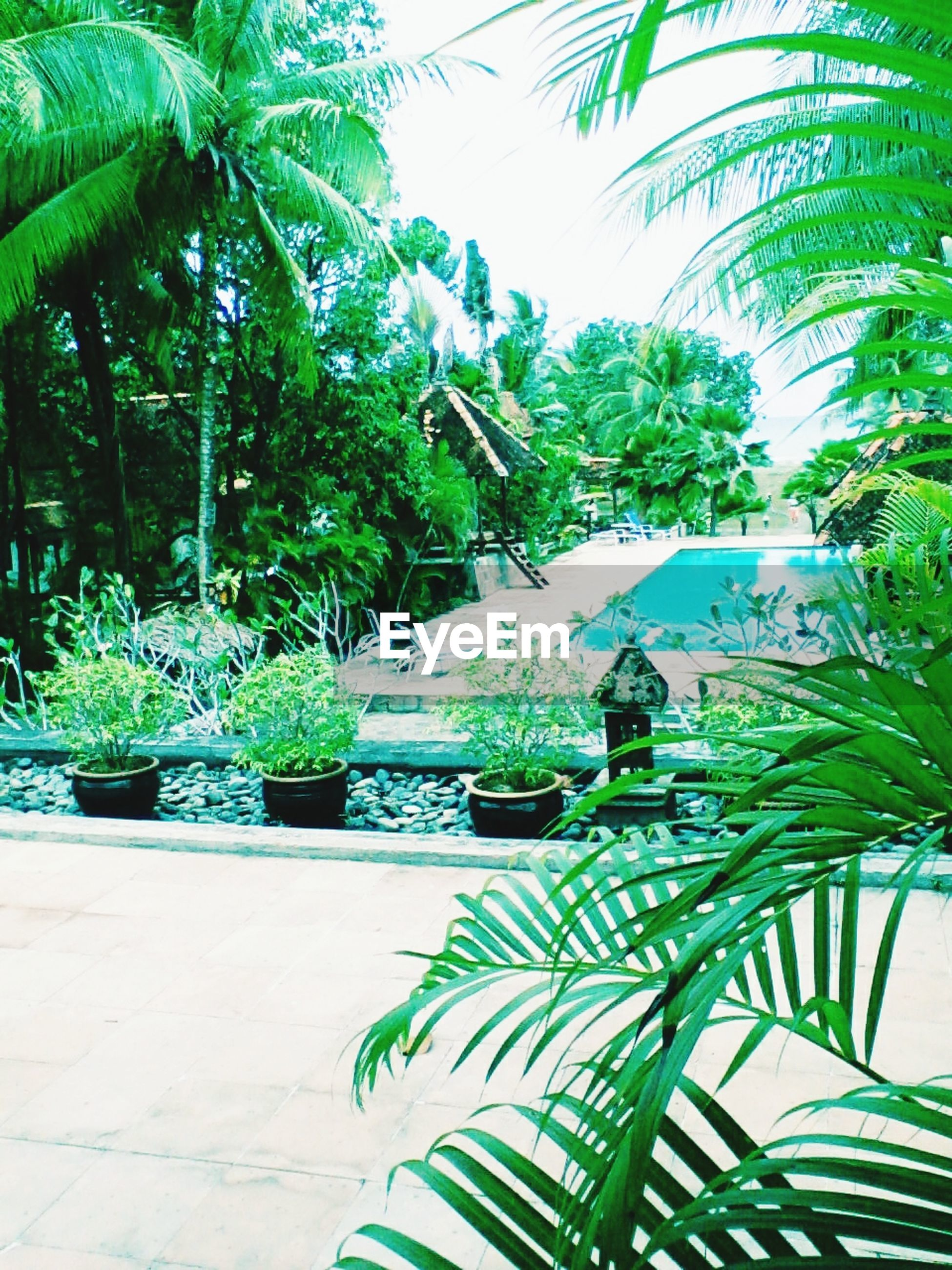 palm tree, tree, growth, green color, plant, leaf, built structure, potted plant, building exterior, architecture, nature, tropical climate, day, formal garden, green, lush foliage, outdoors, no people, sunlight, water
