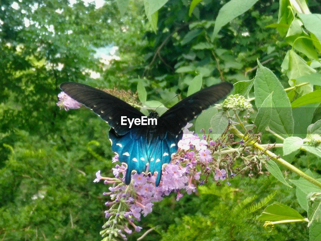 animal, animal themes, one animal, animal wildlife, animal wing, spread wings, plant, animals in the wild, flying, plant part, leaf, nature, day, growth, butterfly - insect, bird, animal body part, no people, beauty in nature, green color, outdoors, butterfly, flapping, purple
