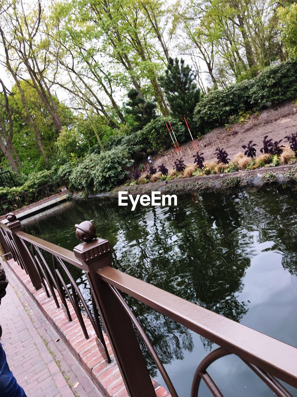 tree, railing, day, water, outdoors, nature, no people, bridge - man made structure, footbridge, growth, beauty in nature, sky