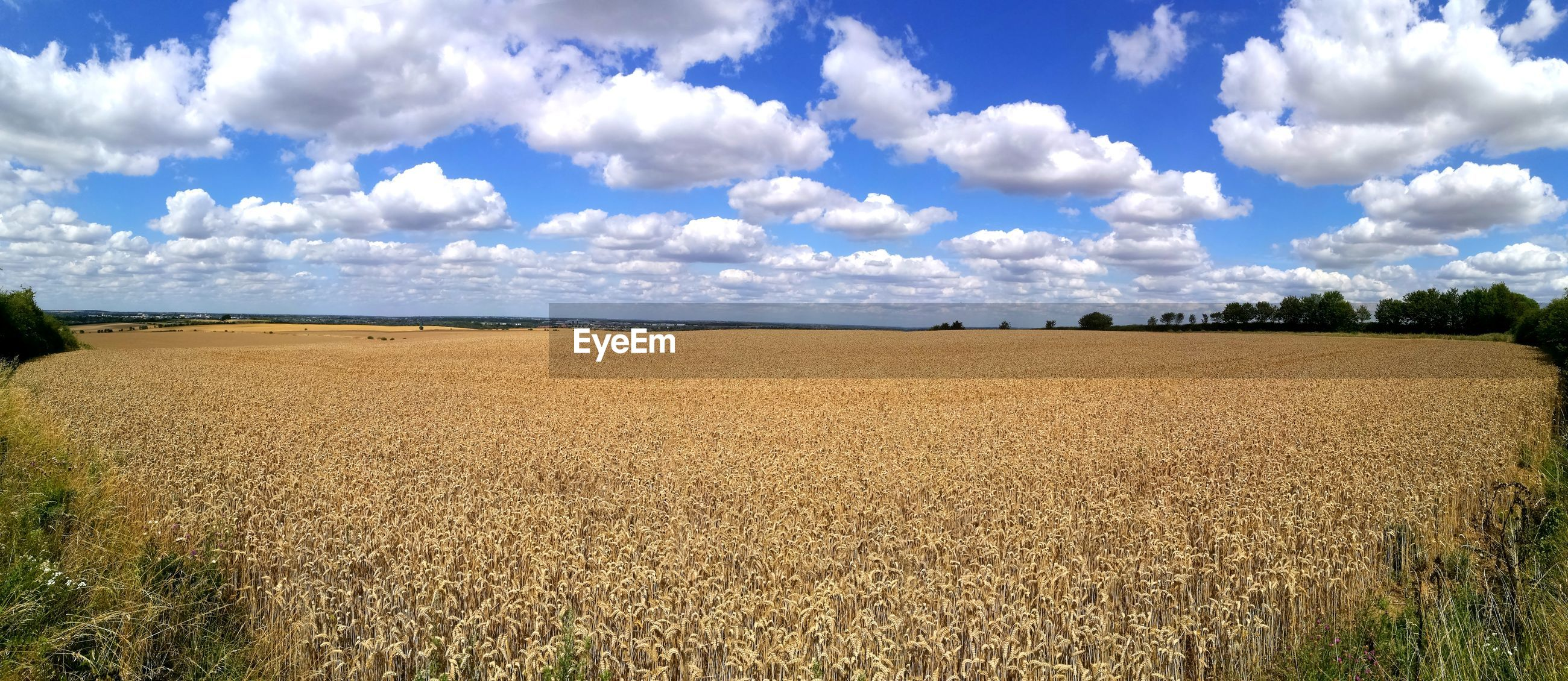 VIEW OF AGRICULTURAL FIELD AGAINST SKY