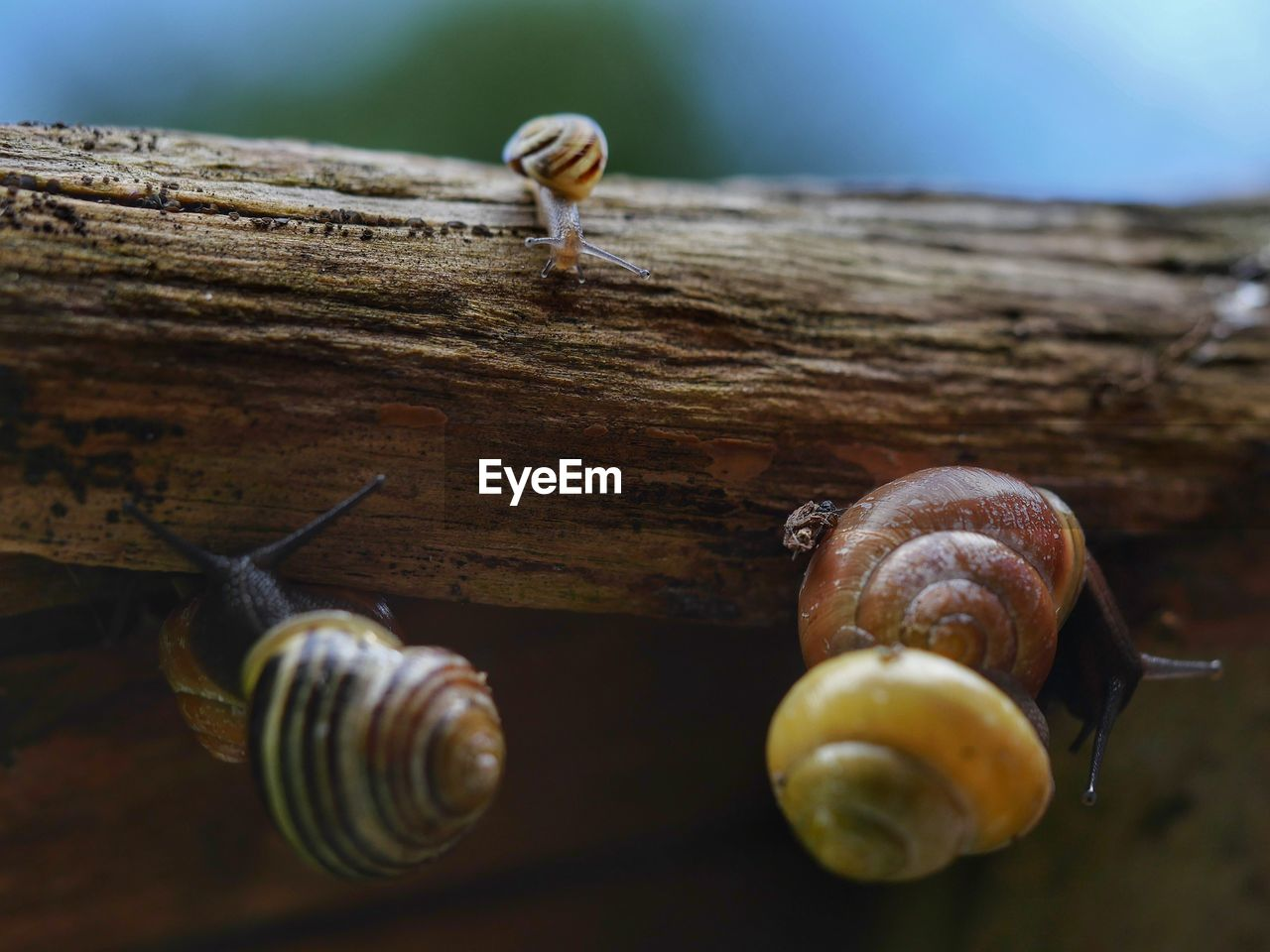 Close-Up Of Snails On Wood