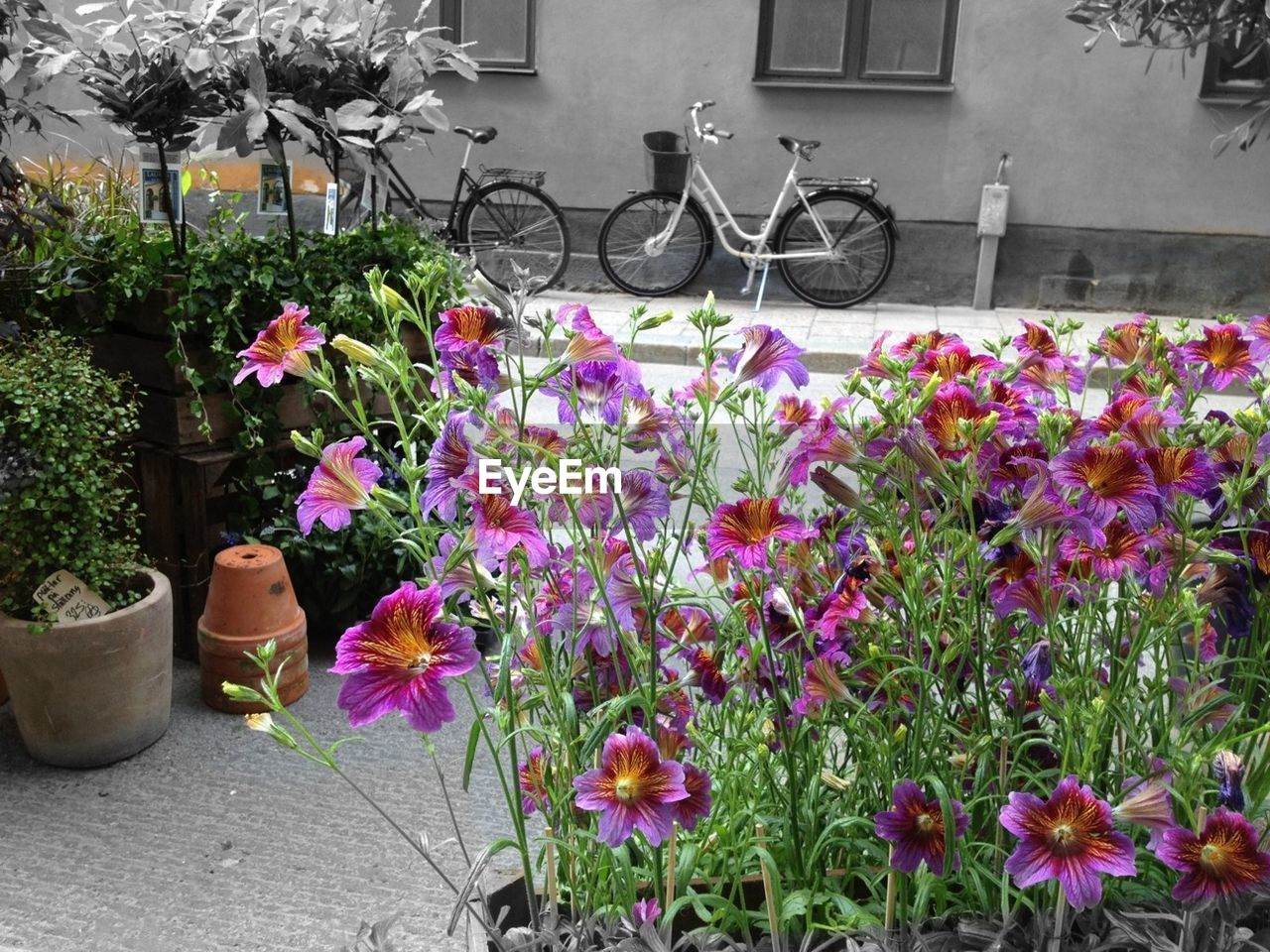 flower, growth, plant, potted plant, outdoors, no people, nature, fragility, day, beauty in nature, freshness, flower head
