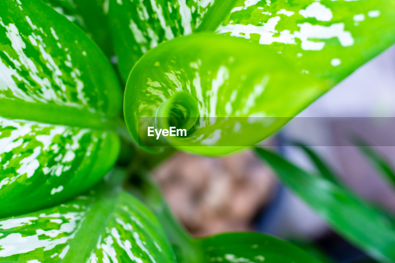 green color, plant, close-up, growth, leaf, freshness, plant part, focus on foreground, no people, beauty in nature, nature, day, selective focus, vulnerability, food and drink, outdoors, food, fragility, wellbeing, vegetable