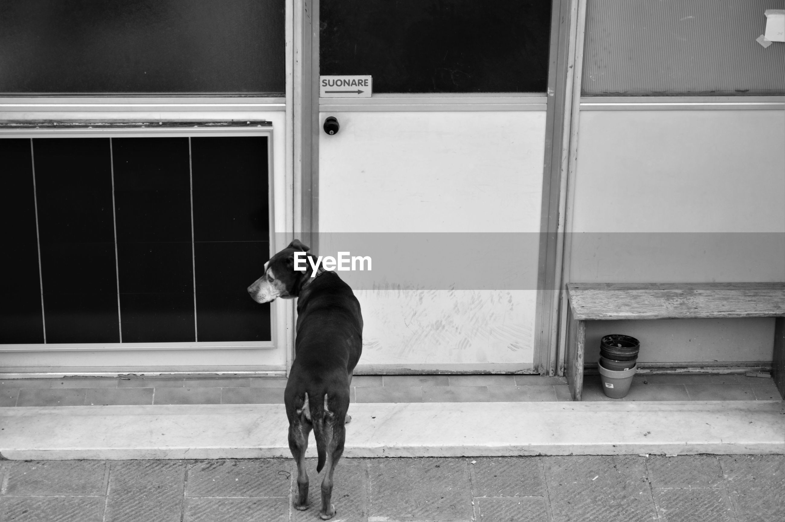 Rear view of dog standing against door