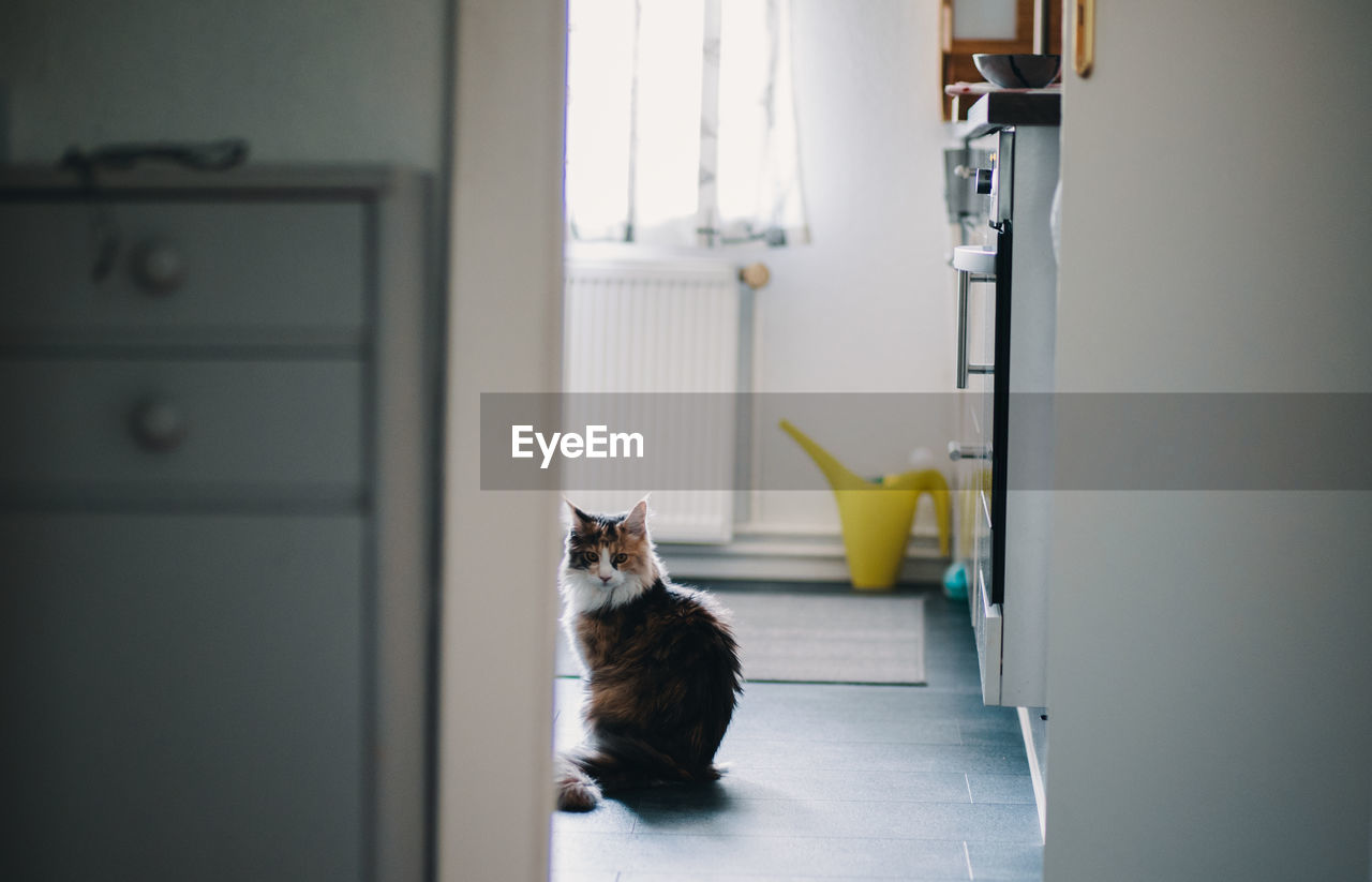 domestic cat, pets, one animal, domestic animals, feline, animal themes, cat, door, mammal, indoors, sitting, looking at camera, no people, portrait, day