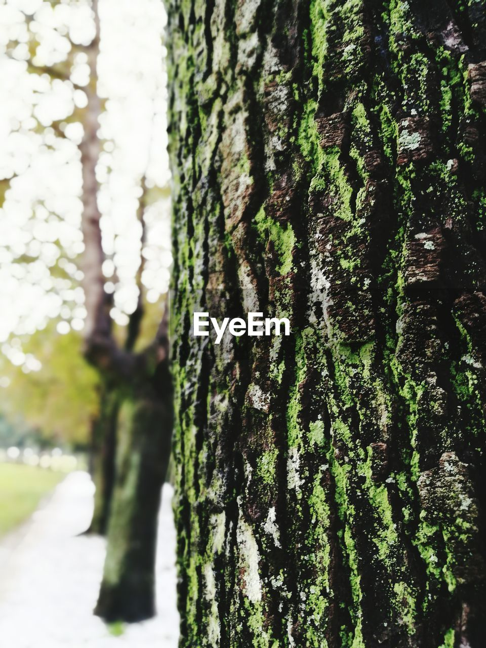 tree trunk, tree, growth, nature, focus on foreground, day, textured, close-up, green color, no people, bark, outdoors, moss, tranquility, beauty in nature, forest, ivy, sky