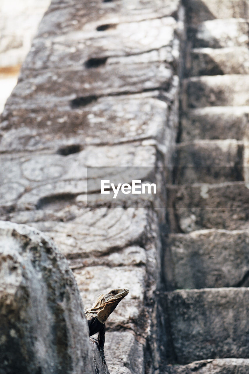 animal themes, animal, animals in the wild, animal wildlife, one animal, vertebrate, focus on foreground, bird, no people, day, solid, outdoors, rock, close-up, nature, wall - building feature, rock - object, textured, architecture, tree