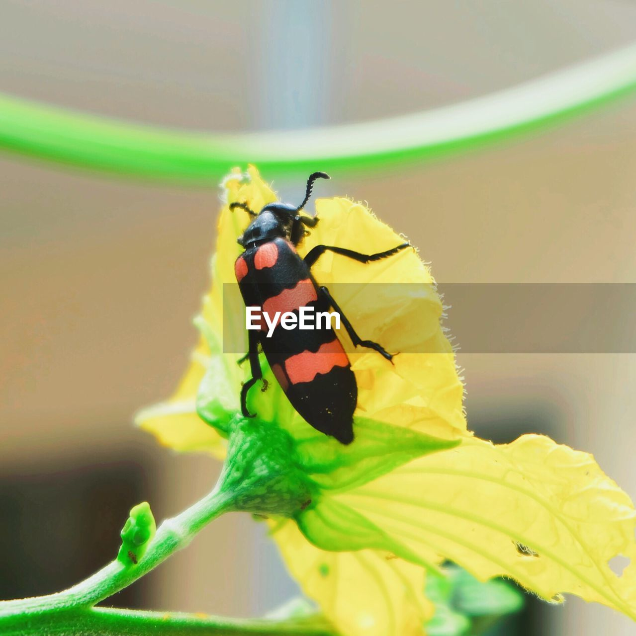 insect, animal themes, animals in the wild, one animal, close-up, animal wildlife, leaf, butterfly - insect, green color, yellow, no people, plant, fragility, focus on foreground, day, nature, freshness, flower, outdoors, beauty in nature, flower head